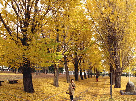 県立歴史館の黄葉
