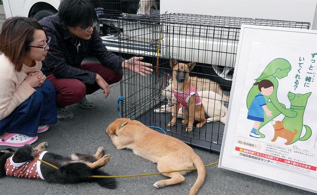 保護犬の譲渡会の模様