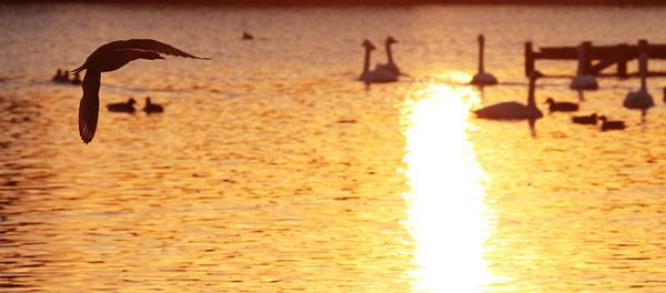 水戸市大津池の夕焼け