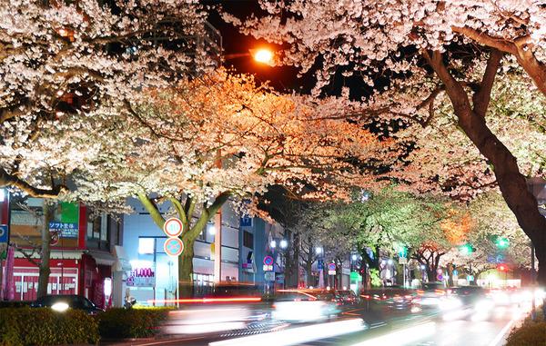 日立平和通りの夜桜のライトアップ
