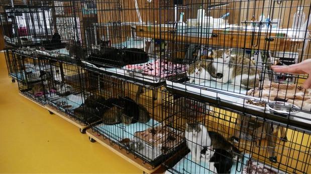 広島県動物愛護センターから引き取られた猫たち