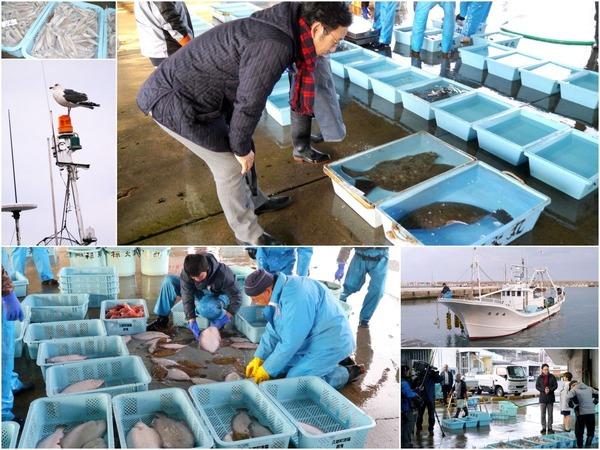 久慈漁港の水揚げ