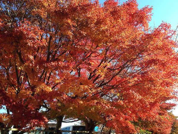 金沢小学校の紅葉