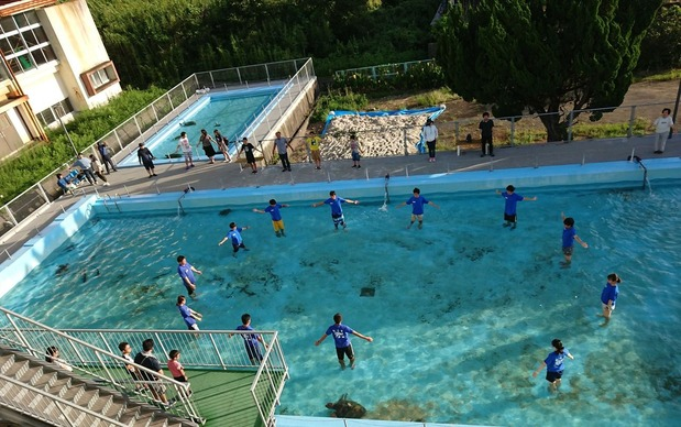 サメたちが泳ぐプール