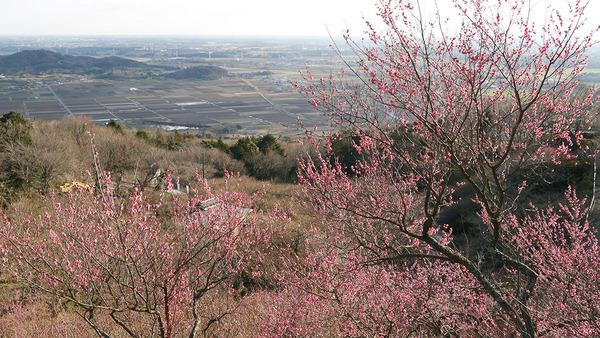 筑波梅林からの風景
