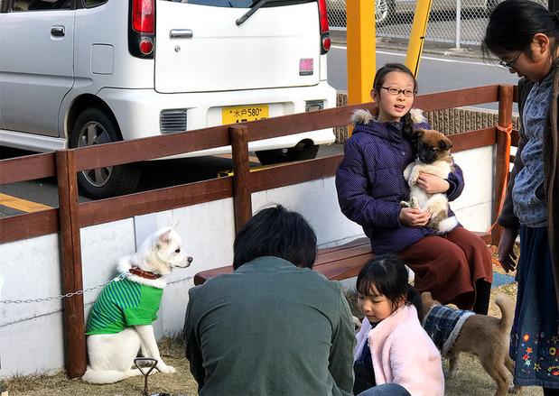 水戸市内で開催された保護犬の譲渡会