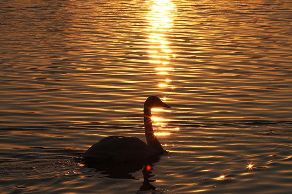 大塚池の夕景