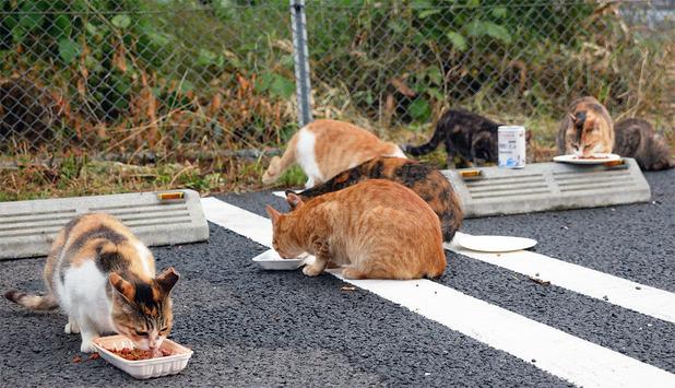 地域猫活動
