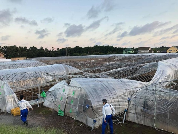台風15によるパイプハウスの被害
