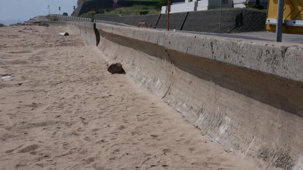 日立市の河原子南浜海岸の越波対策を確認