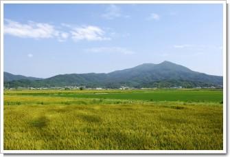 筑波山の麦秋