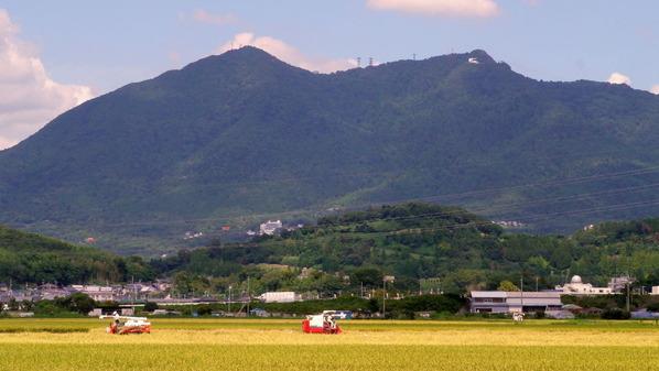 筑波山と稲刈り