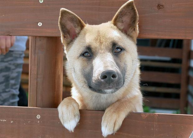 新たな飼い主を待つ保護された犬