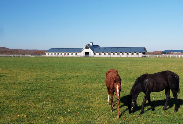 安平町の競馬馬の牧場