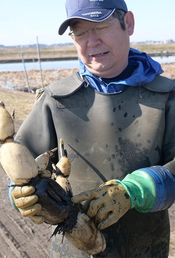 土浦地区のレンコン農家にて腐敗病について調査