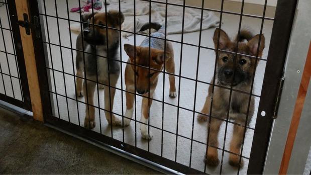 シェルターに収容された犬
