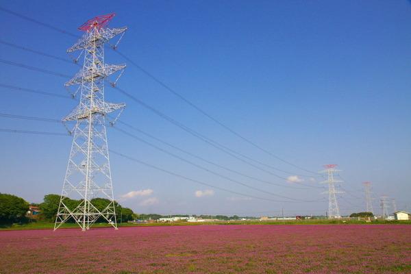 阪東レンゲまつり