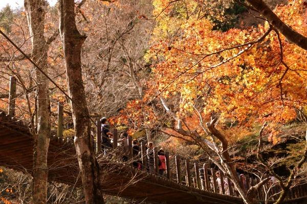 高萩花貫渓谷の紅葉