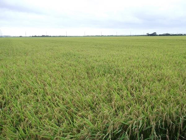 茨城の穀倉地帯・稲敷地域