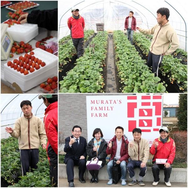 イチゴ農園のイメージ