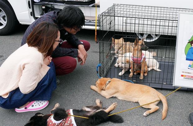 動物愛護団体の譲渡会