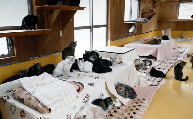 犬猫みなしご救援隊の保護施設