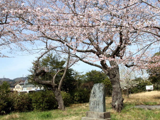 日立市諏訪台の桜塚