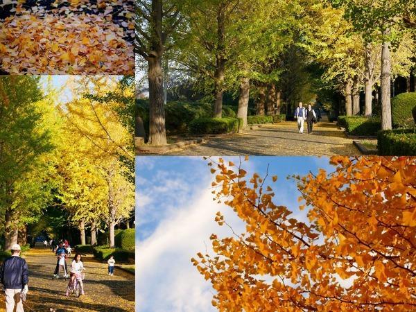 笠松運動公園の黄葉