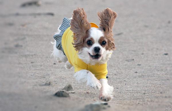 飛行犬・未来バージョン