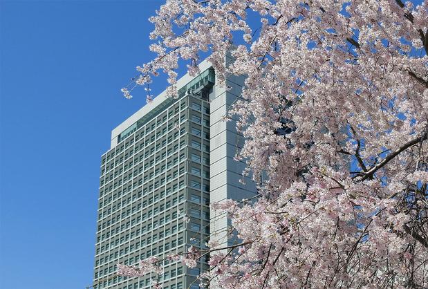 茨城県庁とさくら