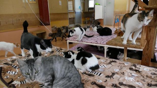終生飼養ハウスの猫たち
