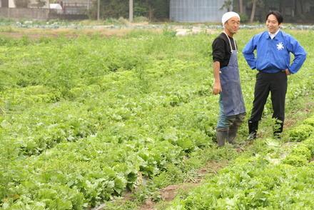 レタス農家視察
