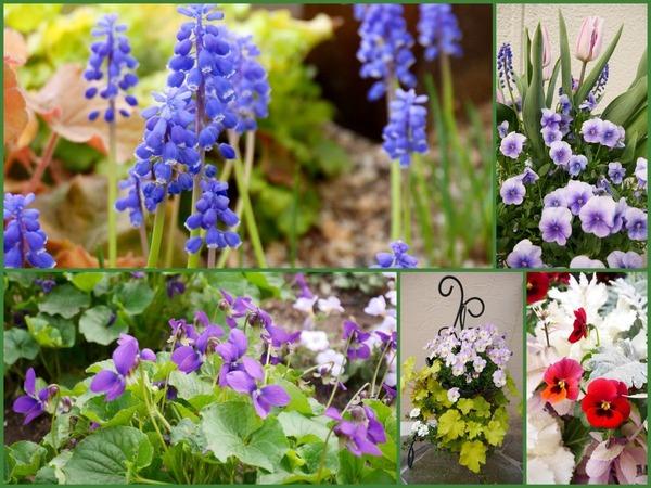 春本番、我が家の小さな庭の風景