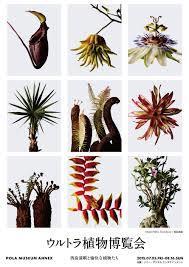 ウルトラ植物