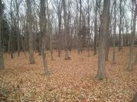 林の下にはふかふか落ち葉