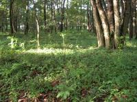雑木林の様子