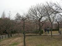 公園管理センターのすぐ横の梅
