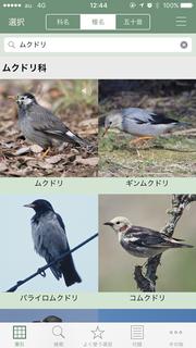 日本の野鳥画面1