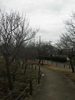 梅の木が並ぶ木道