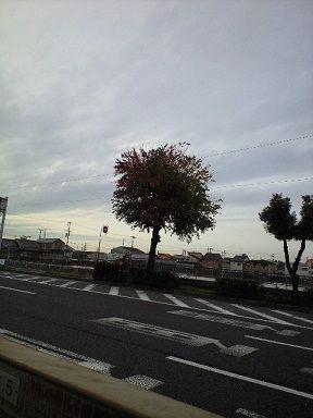 2010_1125_141934-CA390403