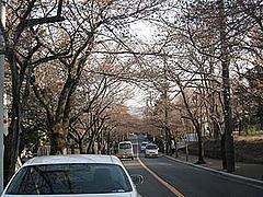 さくら2009-2