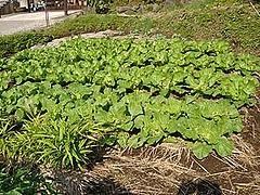 貸し菜園1-2