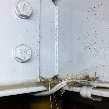 燕 ツバメの巣 前田木材