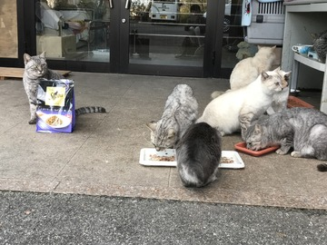霊園の猫たち