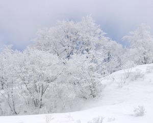 fuyu27-1280 クリスマス