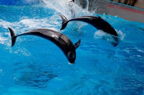 オーストラリアが捕鯨問題で日本に気を遣っている件
