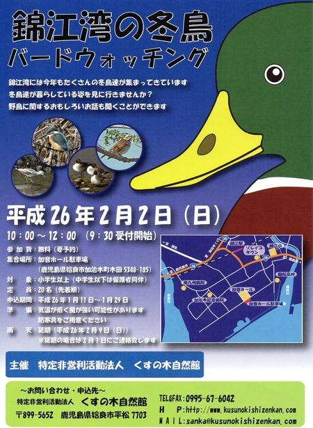錦江湾の冬鳥
