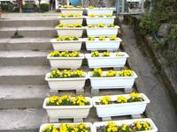 薩摩川内市立上手小学校花壇