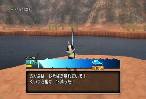 魚図鑑-ムベンガ13