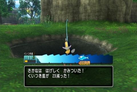 魚図鑑-キングサーモン07
